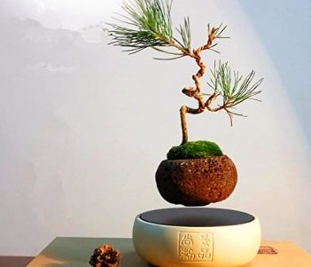 Japanese style Levitating Air Bonsai Pot